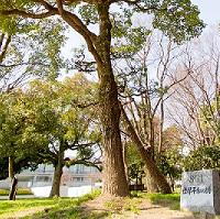 恒久平和の祈りを込めてー「SGI世界平和の樹」